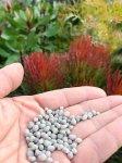 画像2: 乙庭  Fertilizer for Native Plants  (リン酸無配合肥料 800g入) (2)
